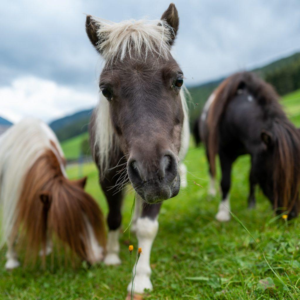 Urlaub am Bauernhof Pony