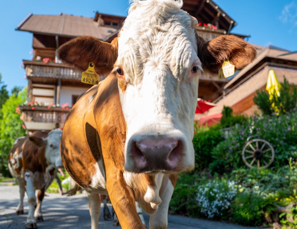 Urlaub am Bauernhof Kärnten